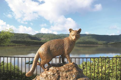 西表島に生息する「イリオモテヤマネコ」の生態について知る