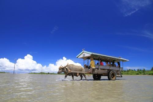 水牛車でのんびり由布島へ♪