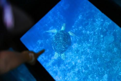 川平湾プレミアムクルージングではマンタやウミガメに会えるかも!?